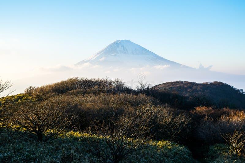 Взгляд туриста Mt Фудзи от озера Ashi стоковое изображение rf