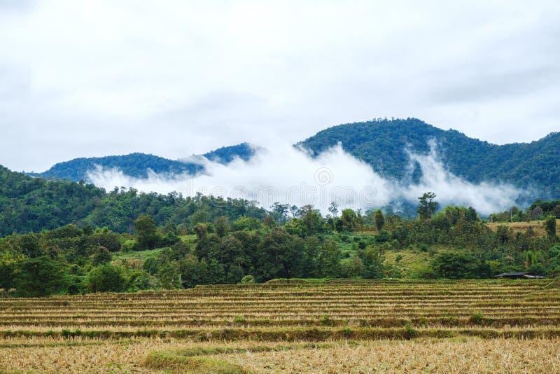 Взгляд фермы риса и людей большого тумана местных в предпосылке неба горы, стоковые фото