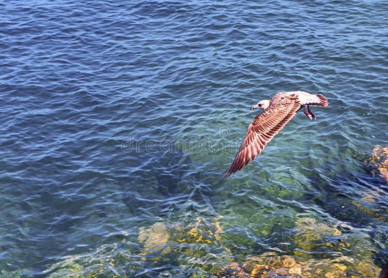 Взгляд чайки летания стоковая фотография rf