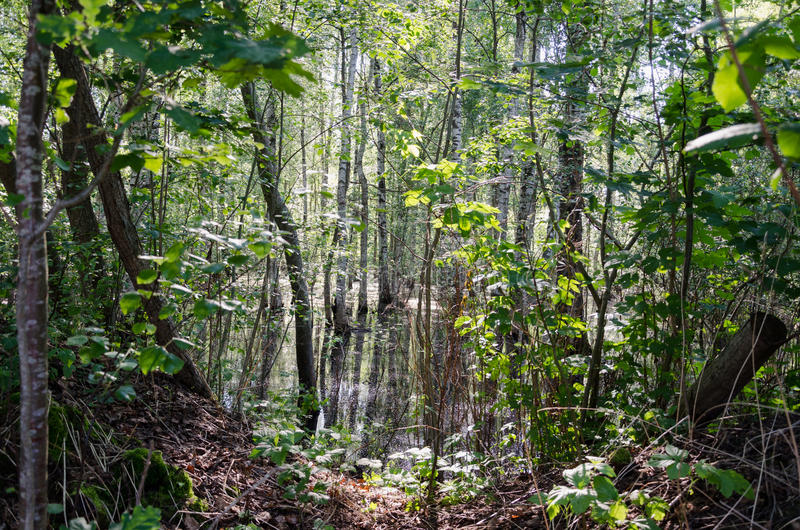 Взгляд через ветви дерева в воде леса затопленной стоковая фотография rf