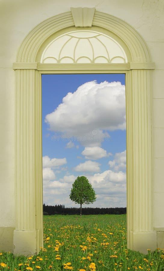 Взгляд через сдобренную дверь, луг одуванчика стоковое изображение rf