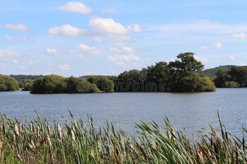 Взгляд через тростники к озеру и острову стоковое изображение