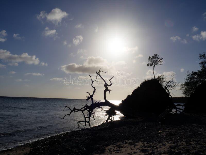 Download Взгляды вокруг старого Landhuis Стоковое Фото - изображение насчитывающей океан, карибско: 41656006