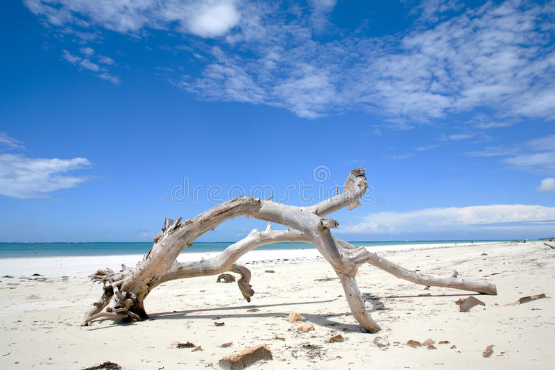 Взгляд Genral пляжа Diani стоковое изображение rf