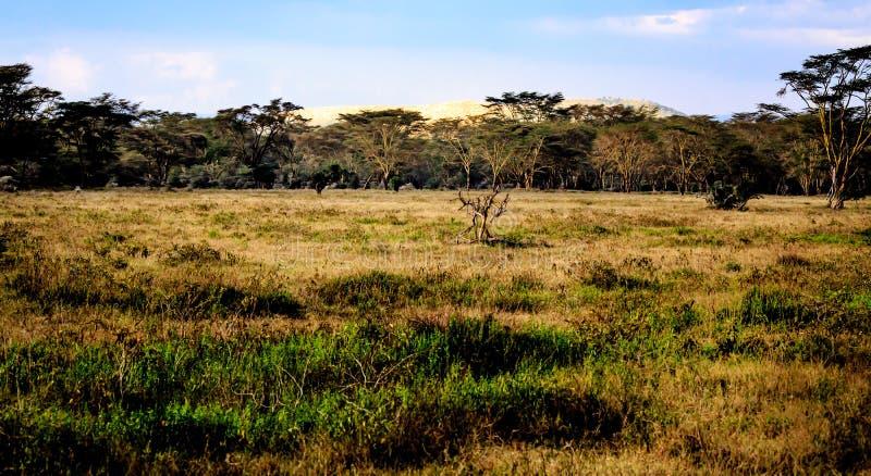 Взгляд Masai Mara стоковое изображение rf
