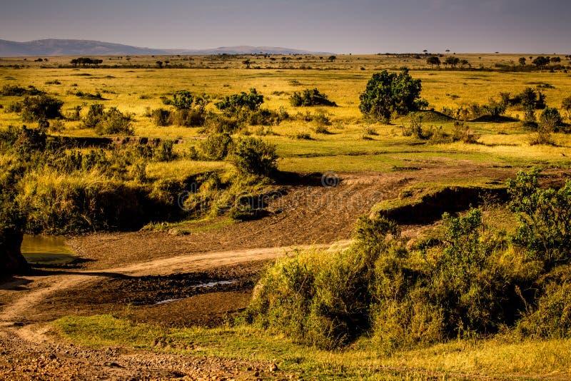 Взгляд Masai Mara стоковые изображения rf