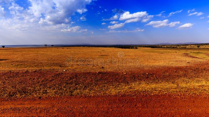 Взгляд Masai Mara (Kenia) стоковая фотография rf