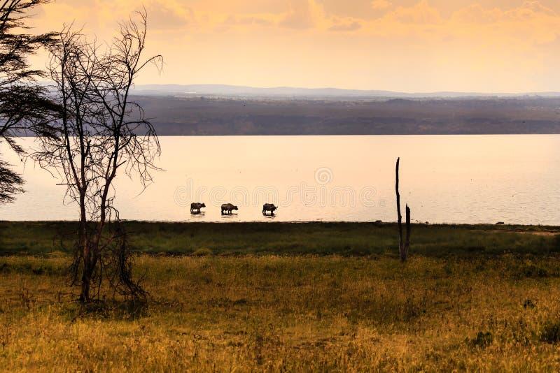 Взгляд Masai Mara (Kenia) стоковое изображение