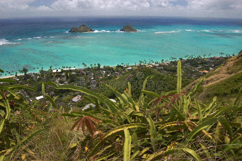 Взгляд Ocen с кактусами от Lanikai, Оаху, Гаваи стоковая фотография rf