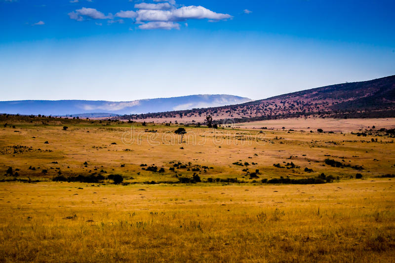 Взгляд Serengeti стоковые фото