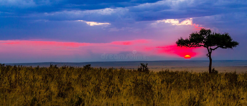 Взгляд Serengeti стоковое фото rf