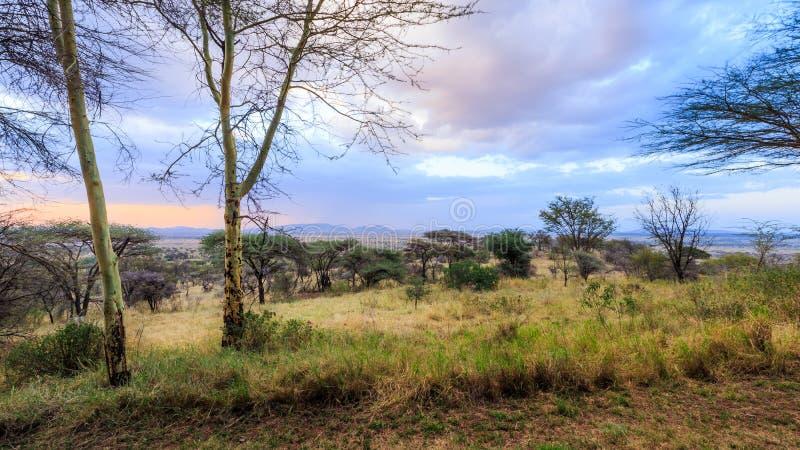 Взгляд Serengeti стоковая фотография rf