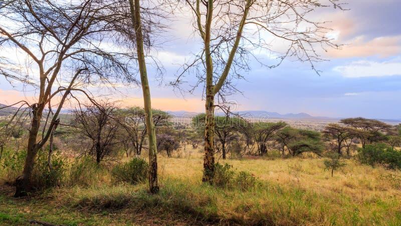 Взгляд Serengeti стоковое изображение rf
