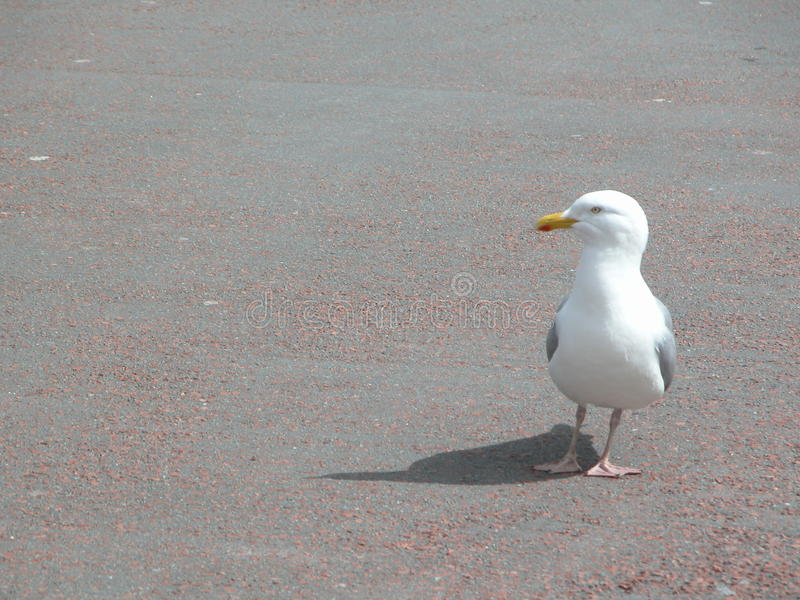 Взморье, море gal стоковое изображение