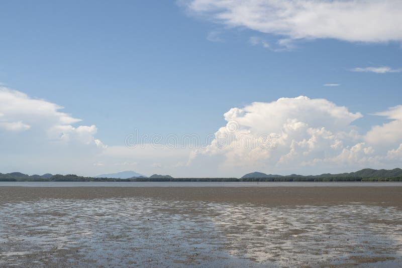 Взморье, побережье, seashore, лес мангровы взморья стоковое фото rf
