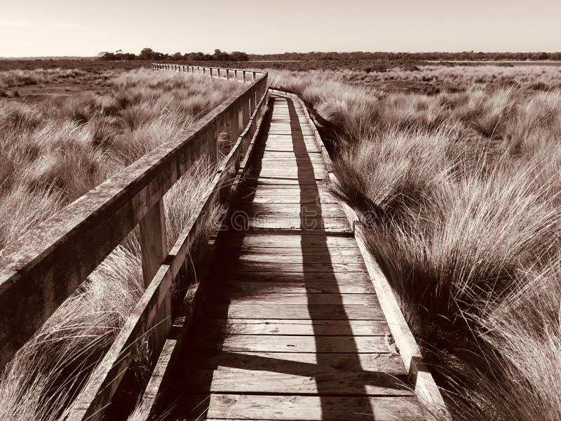 Взойдите на борт прогулки, пляжа Mcloughlins, Виктории, Австралии стоковое изображение rf