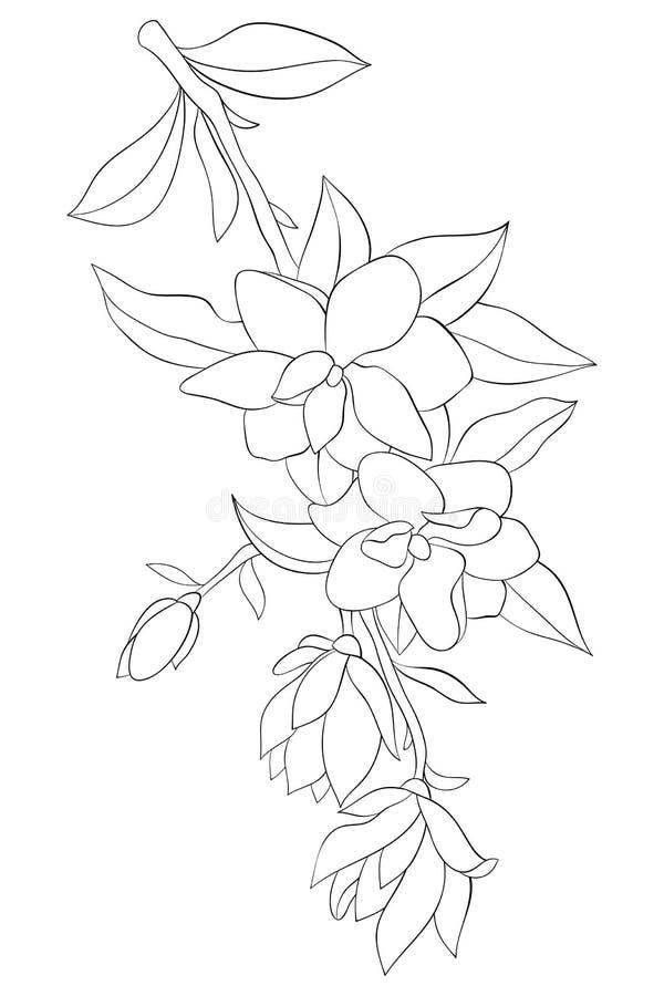Взрослая книжка-раскраска, вызывает милое изображение цветка для ослаблять Иллюстрация стиля искусства Дзэн иллюстрация штока