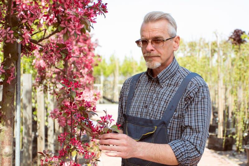 Взрослый садовник около цветков Руки держа планшет В стеклах, борода, нося прозодежды В магазине сада стоковая фотография