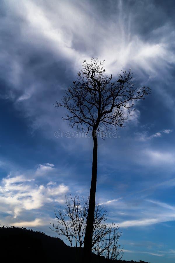 Взрывая облако держит умирая дерево живой стоковые изображения