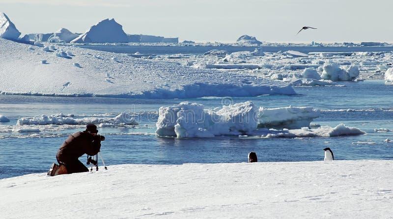 взятия фото персоны пингвина Антарктики стоковые изображения rf
