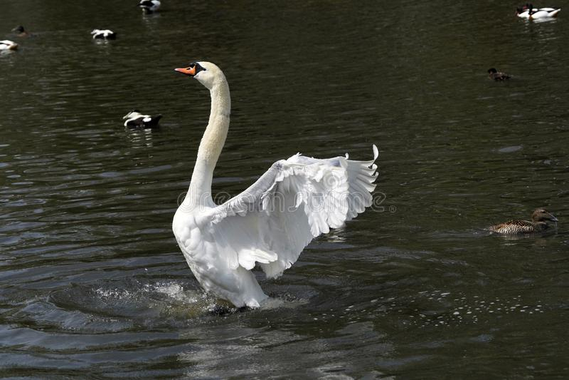 6 видов thoughout фламинго мир стоковое фото rf