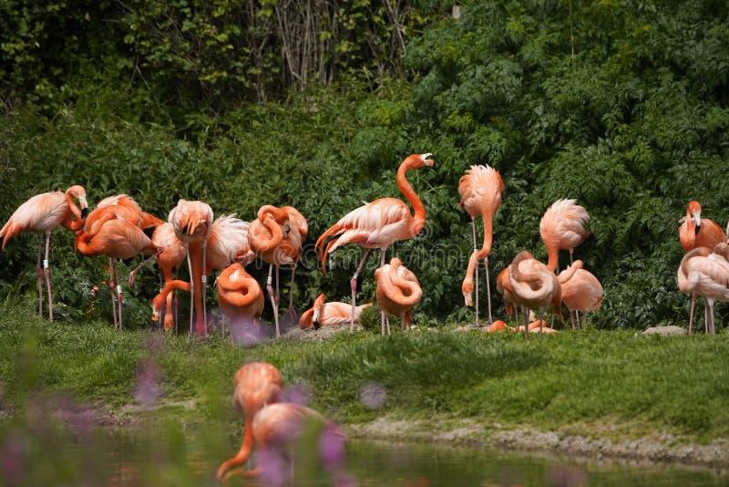 6 видов thoughout фламинго мир стоковые изображения