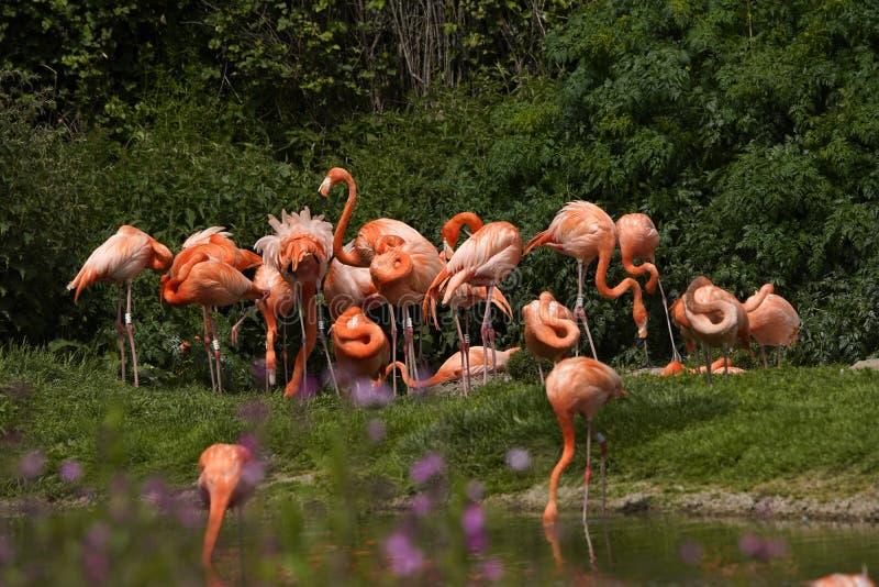 6 видов thoughout фламинго мир стоковые фотографии rf