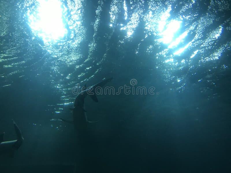 Вид акулы в Вьетнаме стоковые изображения