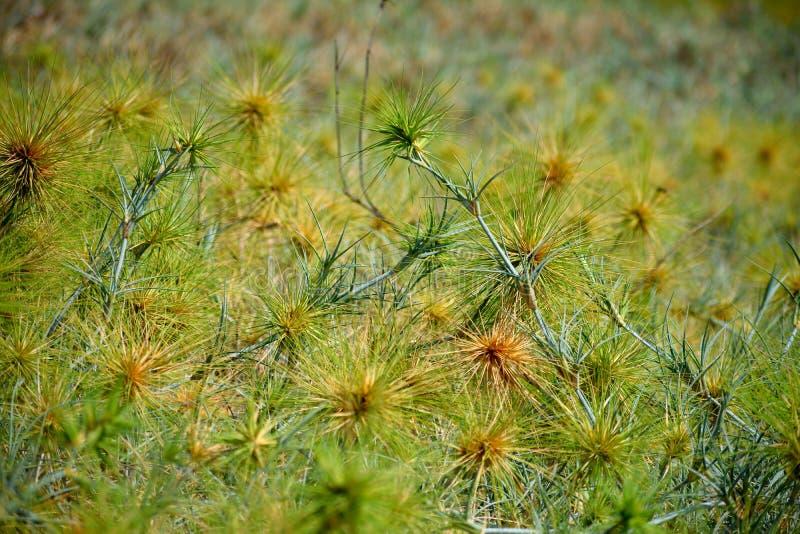 Вид кактуса стоковая фотография rf