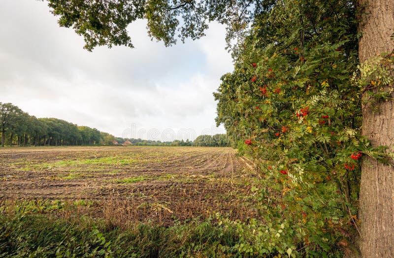 Вид кукурузного заглушки в осеннем сезоне стоковое фото