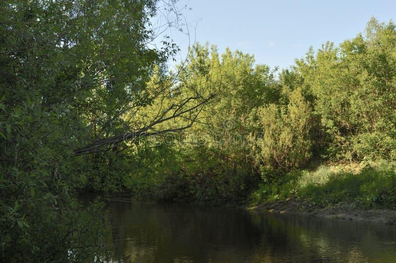 Вид на озеро природы с пасмурной водой и окружающее с заводом, деревом, выходят, с отражением солнечного света тени на стоковая фотография