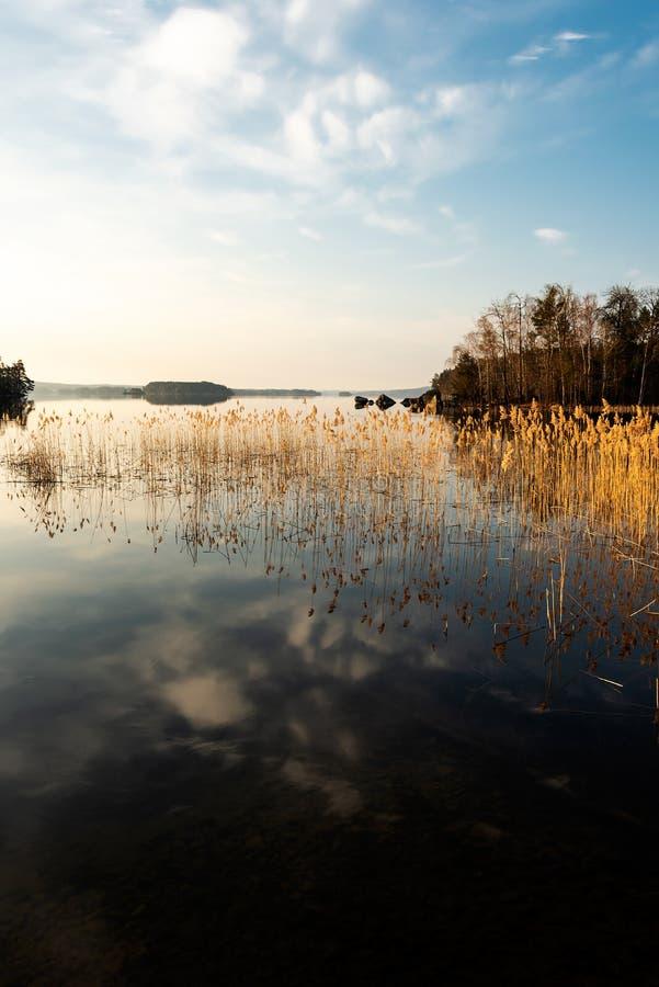 Вид на озеро утра стоковое фото rf