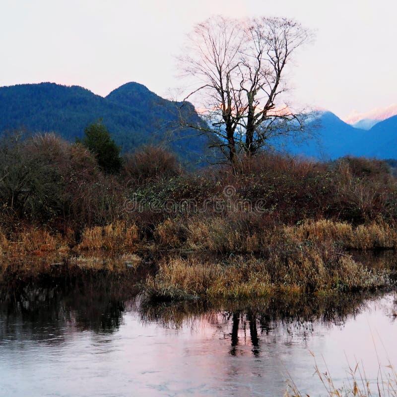 Вид на озеро Pitt дерева около земли болота стоковая фотография rf