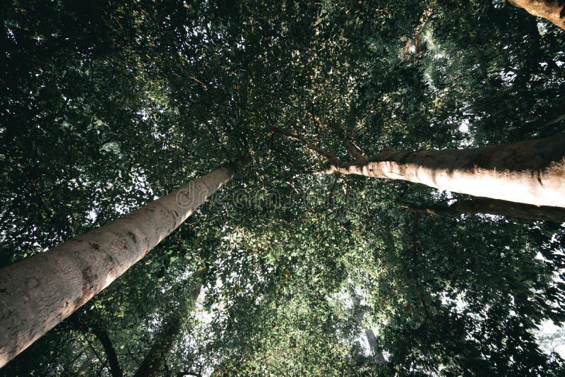 Вид на тропические деревья с зелеными листьями в тропическом лесу под углом стоковые изображения rf