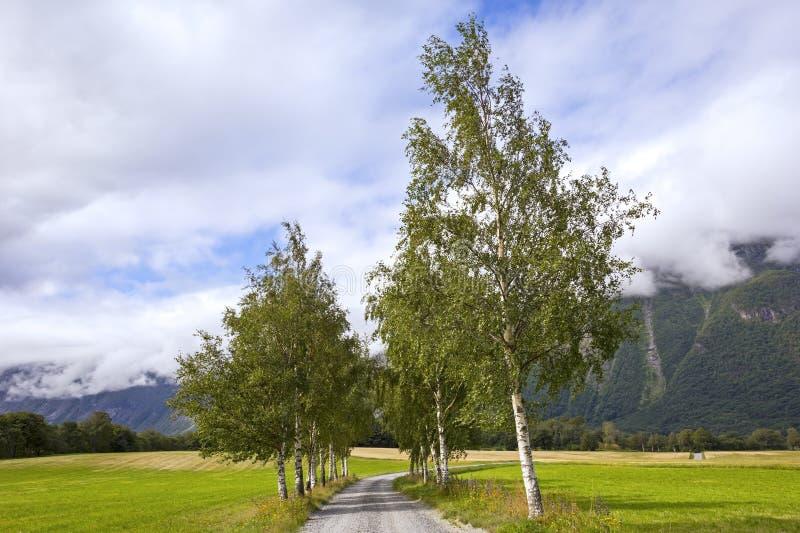 Вид небольшой проспект с березовыми деревьями стоковая фотография