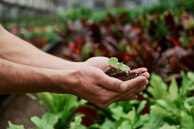 Вид сбоку Менсы держат землю за руки, а растение в середине мало стоковые фото