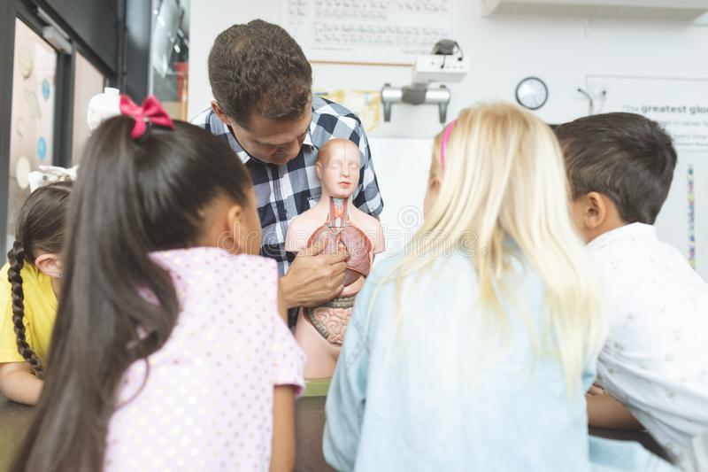 Вид сзади детей школы смотря фиктивный скелет представленный их учителем стоковые изображения
