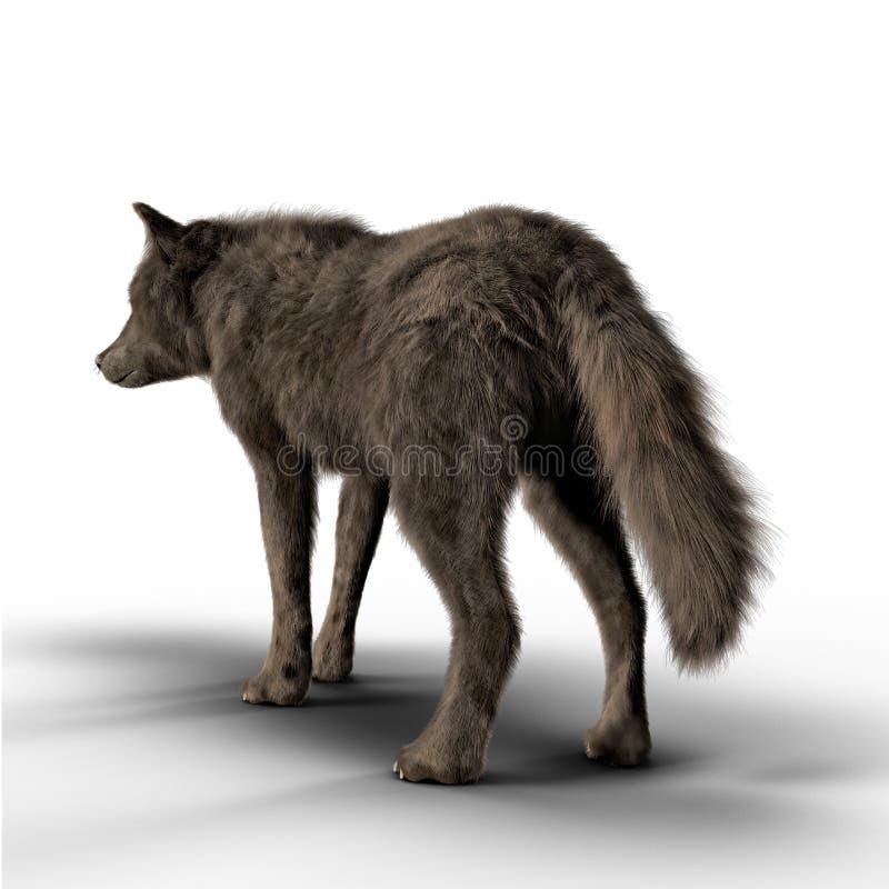 Вид сзади представляет черного волка смотря в расстояние бесплатная иллюстрация