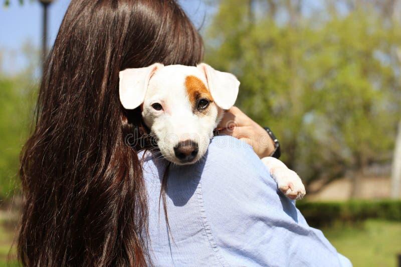 Вид сзади привлекательной молодой женщины обнимая милого щенка терьера Рассела jack в парке, зеленой лужайке, предпосылке листвы  стоковая фотография rf
