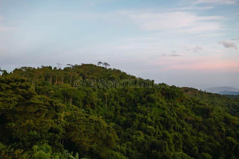 Вид спереди леса солнечного света лета теплый стоковые изображения rf