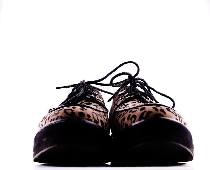 Вид спереди стильного коричневого цвета и черных ботинок loafer печати леопарда шнурка-вверх стоковые фотографии rf