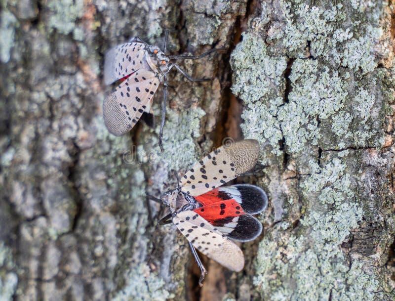 Вид с вершиной вид на Пятнистую фонарду Ликорму, округ Беркс, Пенсильвания стоковые изображения