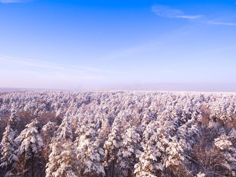 Вид с воздуха белого леса зимы с деревьями покрытыми снегом Голубое небо, солнечный день стоковая фотография