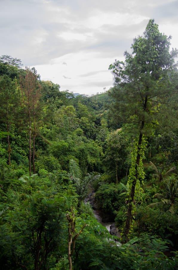 Вид с воздуха в джунглях стоковые изображения rf