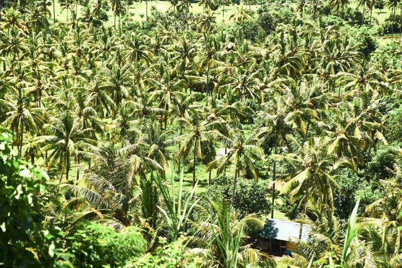 Вид с воздуха деревьев джунглей стоковые фотографии rf