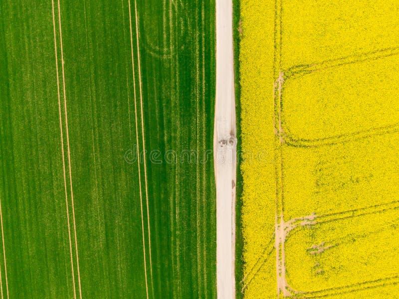 Вид с воздуха дороги между зелеными и желтыми полями Трутень земледелия снятый канола поля рапса и поля зеленого урожая Экологичн стоковое изображение