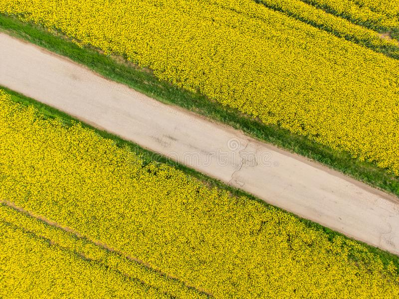 Вид с воздуха желтого канола поля в участке цветеня Земледелие экологичности около фермы стоковое изображение