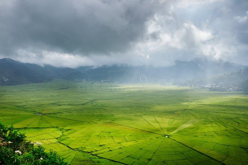 Вид с воздуха зеленых полей риса сети паука Lingko с прошивкой солнечного света через облака к полю с идти дождь Flores, восточны стоковые фото
