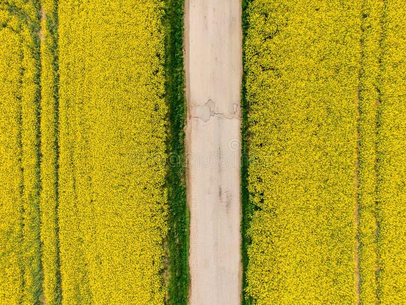 Вид с воздуха канола поля рапса с дорогой внутрь Земля земледелия около фермы, концепции экологичности стоковое изображение