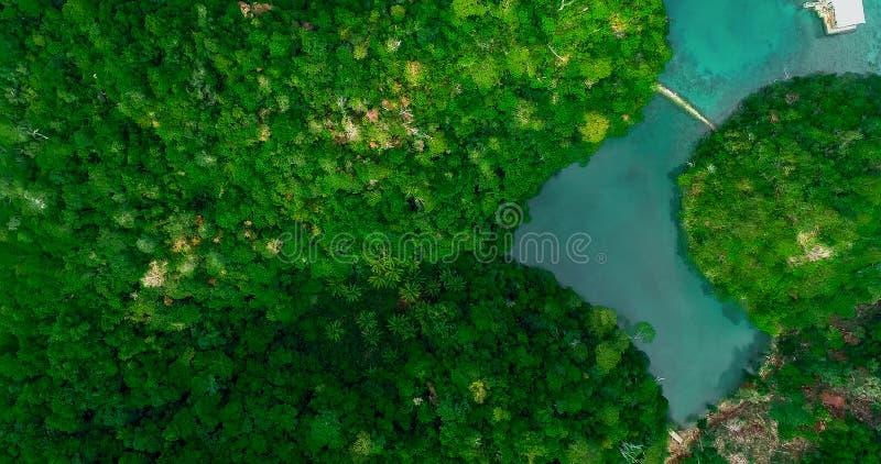 Вид с воздуха лагуны Sugba Красивый ландшафт с голубой лагуной моря, национальным парком, островом Siargao, Филиппинами стоковые изображения rf